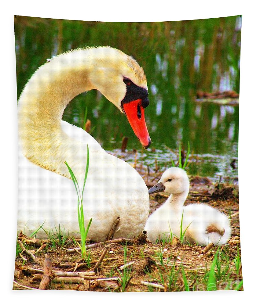 Adult Tapestry featuring the photograph Mother Swan And Baby by Nick Zelinsky