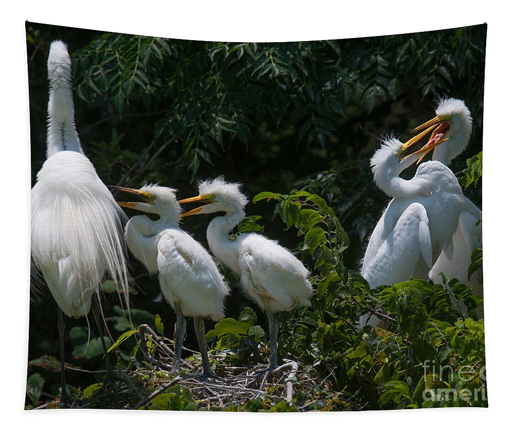 Egret Tapestry featuring the photograph Motherly Duties by Dale Powell