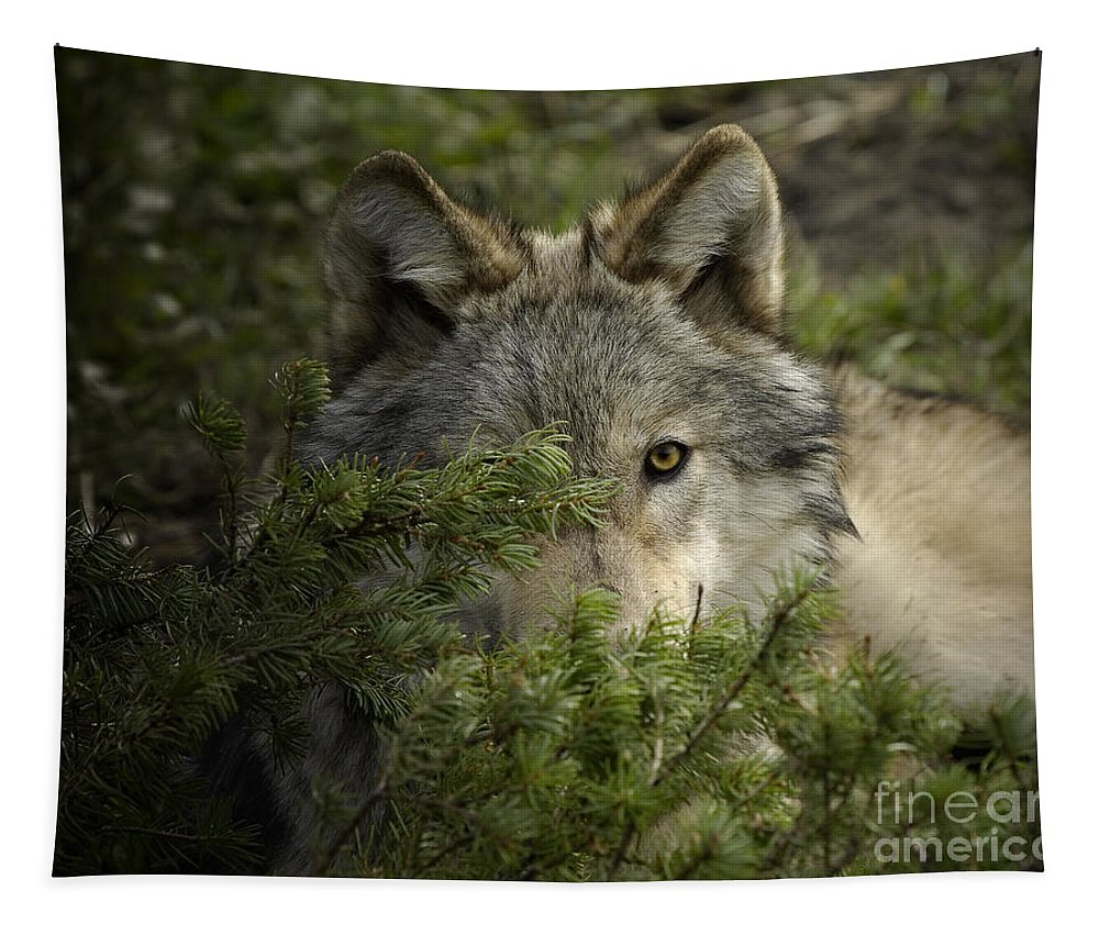 Wolf Tapestry featuring the photograph Motionless by Wildlife Fine Art