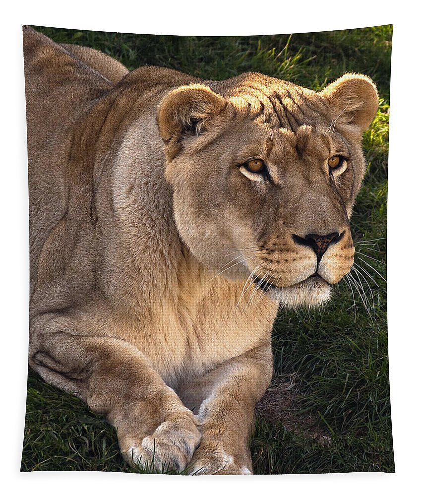 Lion Tapestry featuring the photograph Moving In by Steve Harrington