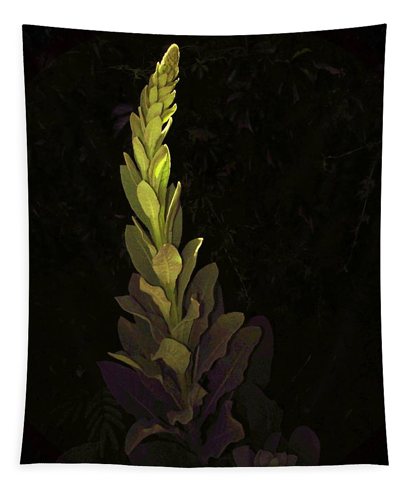 Herb Tapestry featuring the photograph Mullein 2013 by Joyce Dickens