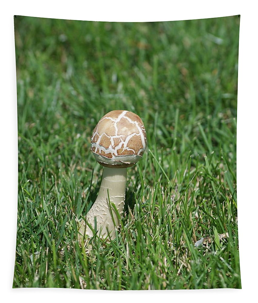 Mushroom Tapestry featuring the photograph Mushroom 01 by Thomas Woolworth