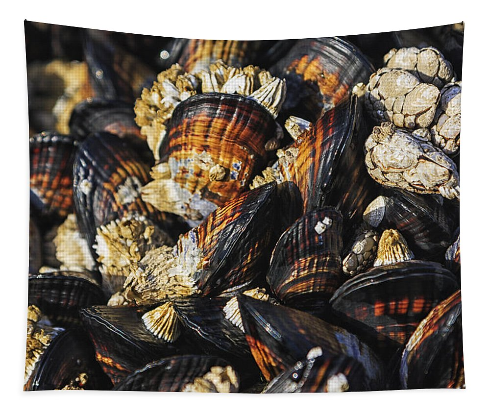 Oregon Tapestry featuring the photograph Mussels And Barnacles by Mark Kiver