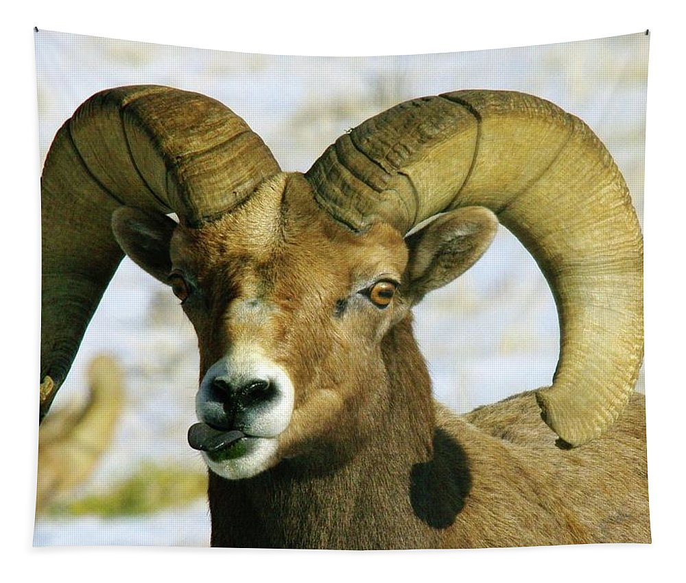 Bighorn Sheep Tapestry featuring the photograph Na Na Nanny Poo by Jeff Swan