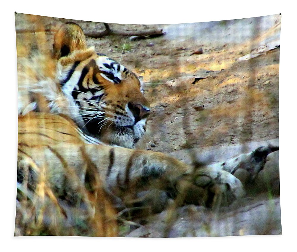 Bengal Tiger Tapestry featuring the photograph Naptime For A Bengal Tiger by Laurel Talabere