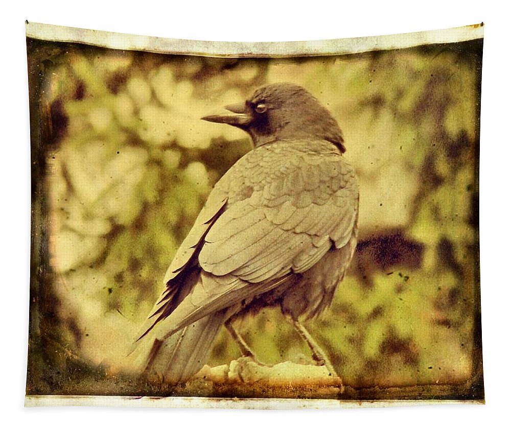 Aged Crow Art Image Tapestry featuring the photograph Natural Crow by Gothicrow Images