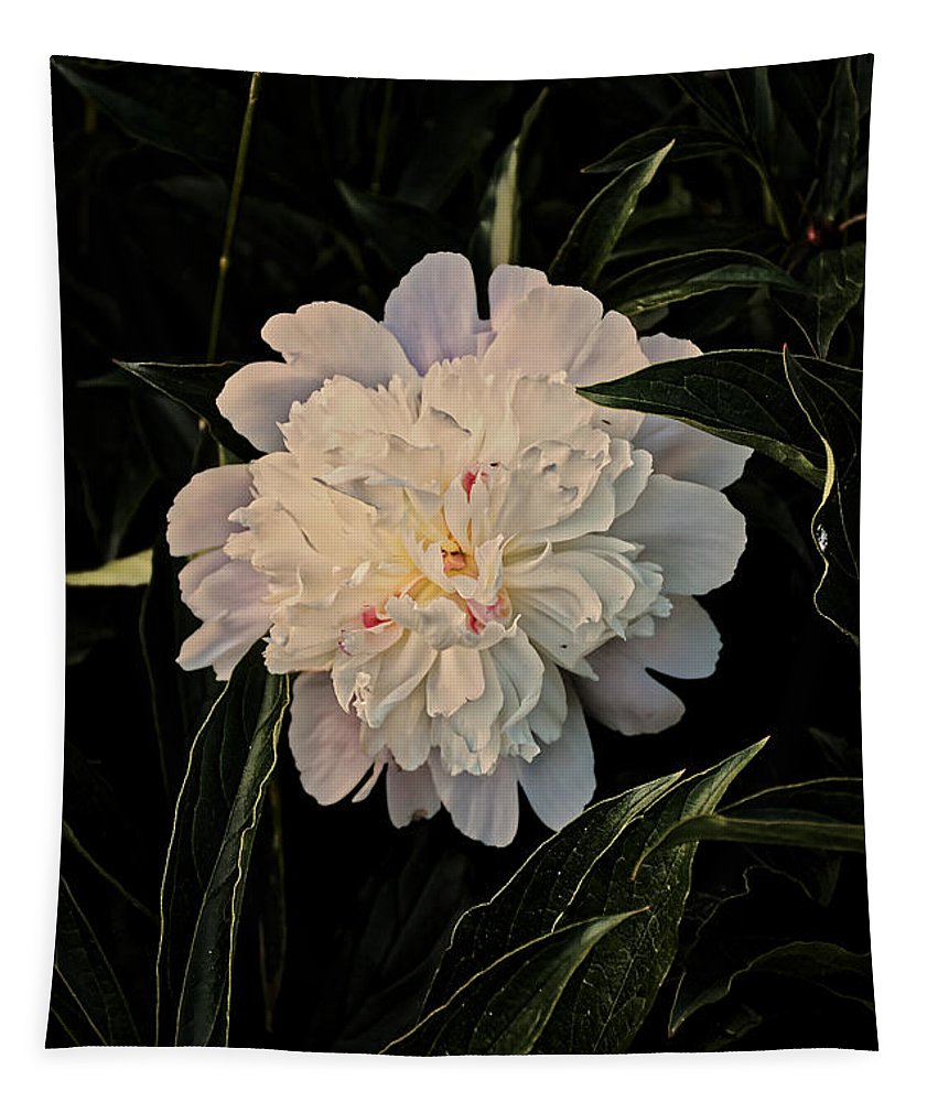 Peony Tapestry featuring the photograph Natural Peony by Sherman Perry