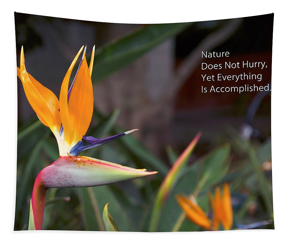 Bird Of Paradise Tapestry featuring the photograph Nature Does Not Hurry Bird Of Paradise by Thomas Woolworth