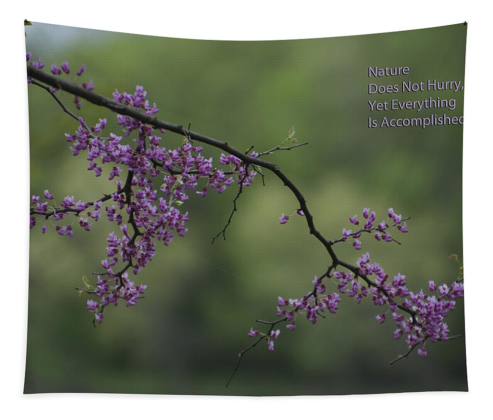 Tree Tapestry featuring the photograph Nature Does Not Hurry Blossoms In Purple by Thomas Woolworth
