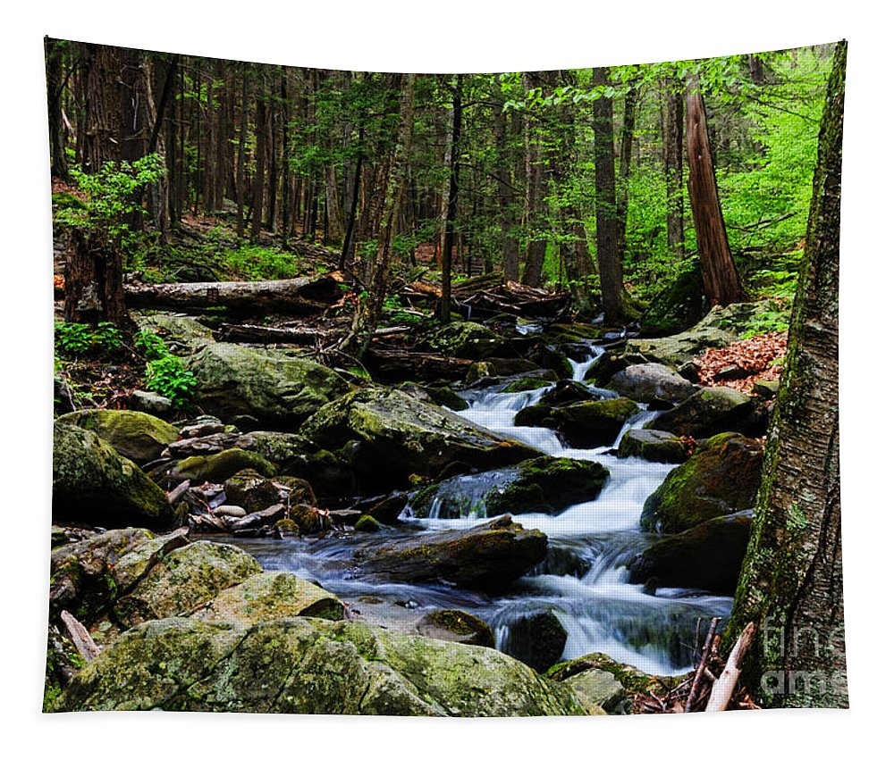 Paul Ward Tapestry featuring the photograph Nature Walk by Paul Ward