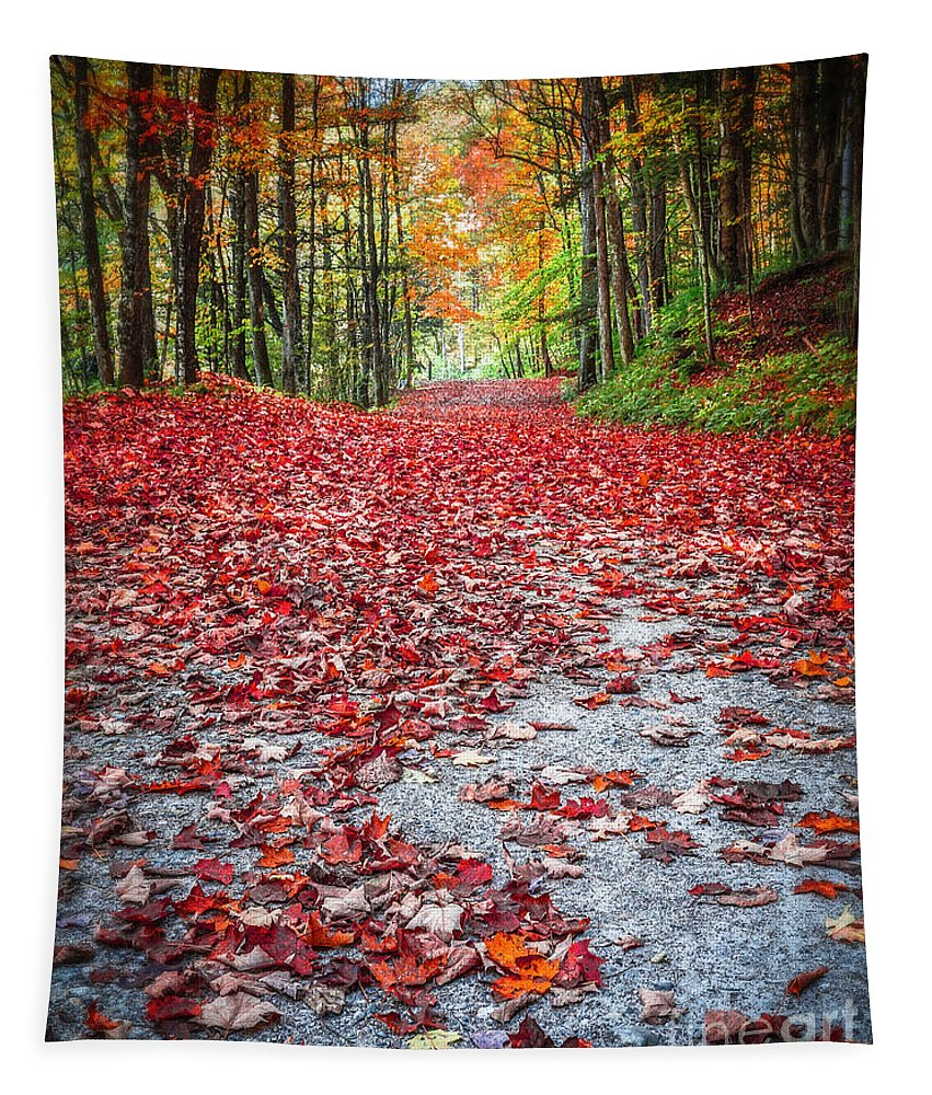 Fall Tapestry featuring the photograph Nature's Red Carpet by Edward Fielding
