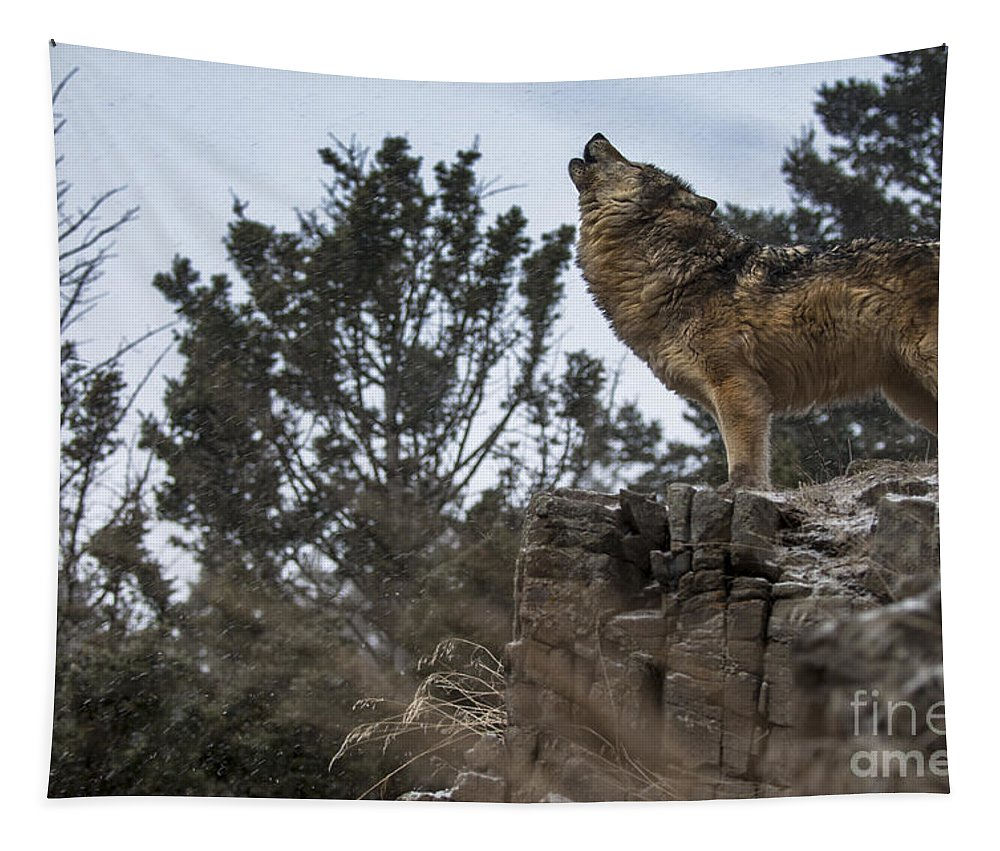 Wolf Tapestry featuring the photograph Natures Song by Wildlife Fine Art