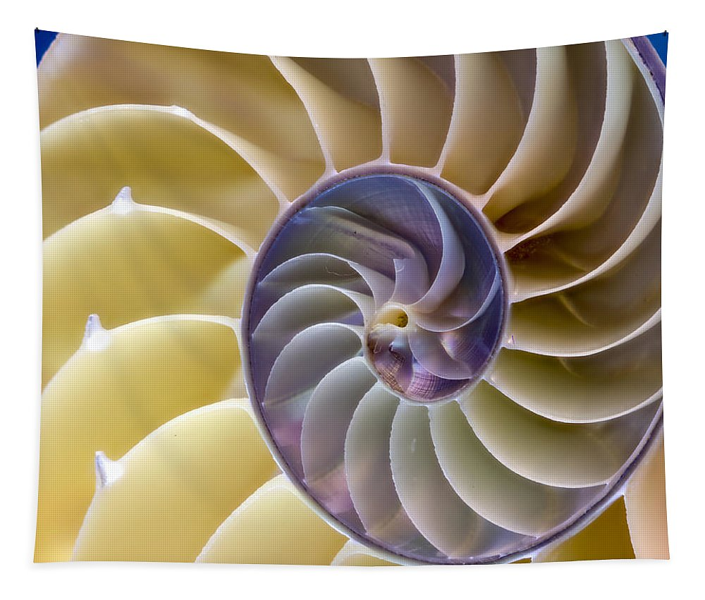 Nautilus Tapestry featuring the photograph Nautilus Side View by Jean Noren