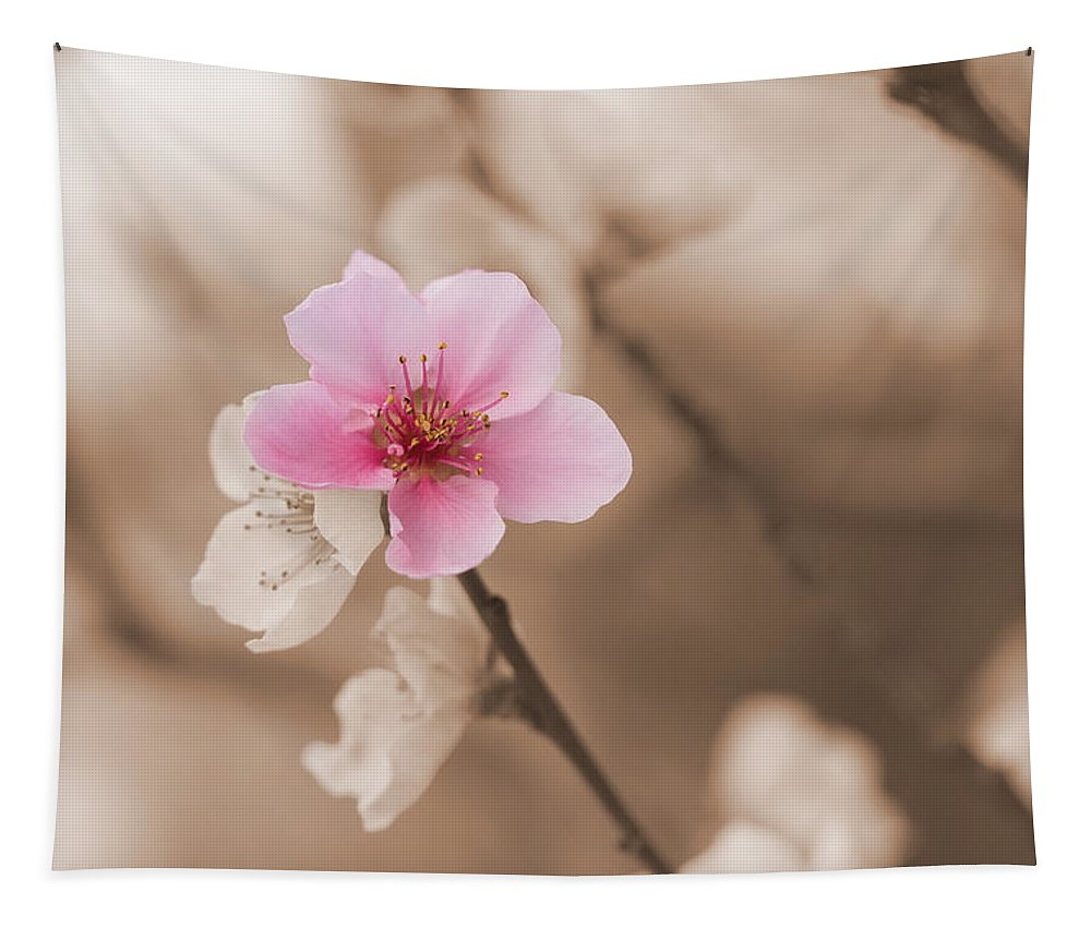Nectarine Tapestry featuring the photograph Nectarine Flower Blooming by Jaroslav Frank