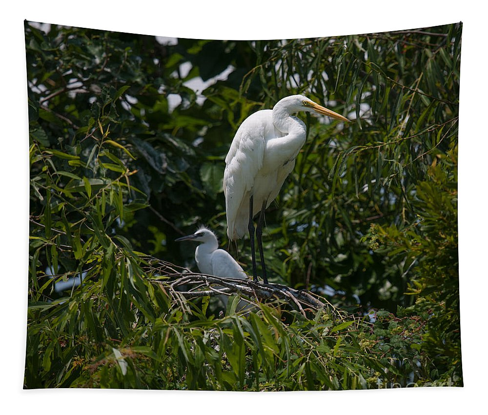 Egret Tapestry featuring the photograph Nest Lookout by Dale Powell