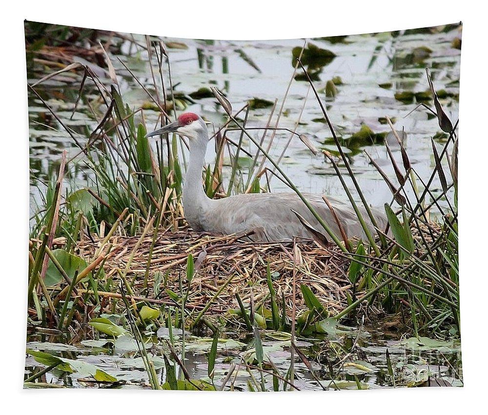 Nesting Bird Tapestry featuring the photograph Nesting Sandhill Crane by Carol Groenen
