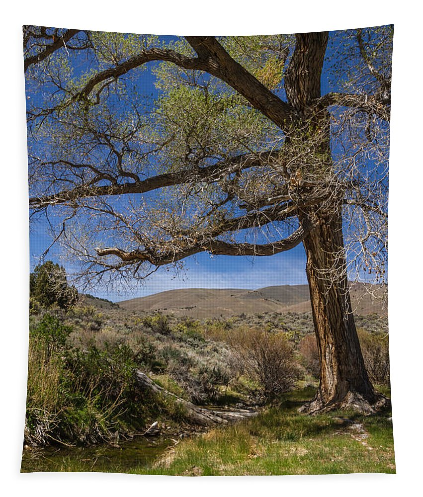 Nevada Cottonwood Tapestry featuring the photograph Nevada Cottonwood by Mitch Shindelbower