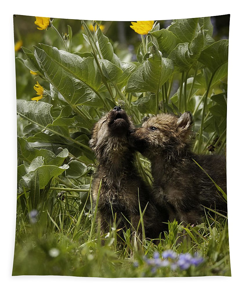 Wolves Tapestry featuring the photograph New Voices by Wildlife Fine Art