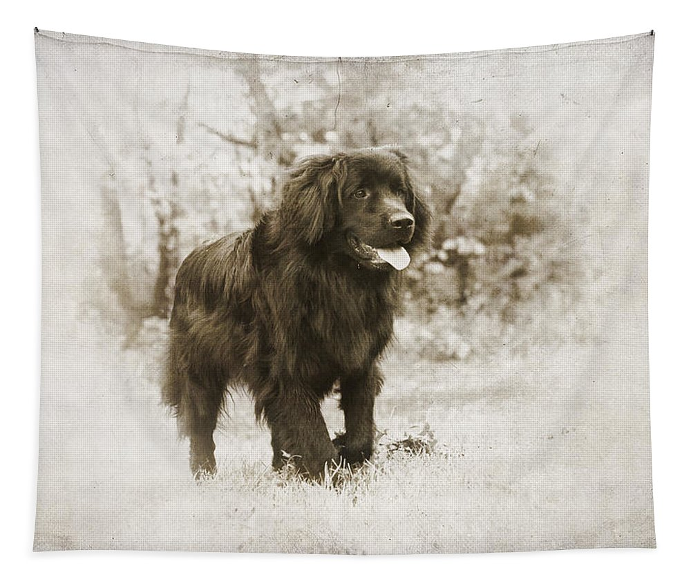 Newfoundland Tapestry featuring the photograph Newfoundland Friend by Annette Persinger
