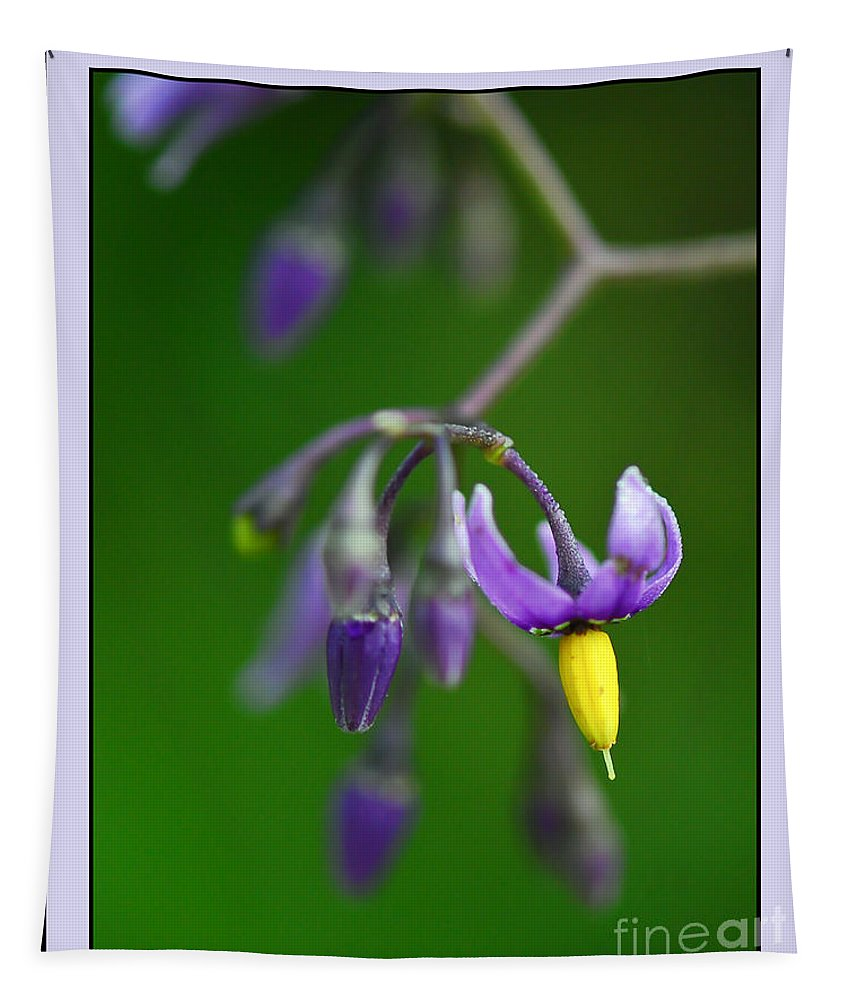 Nightshade Wildflower Tapestry featuring the photograph Nightshade by Kerri Farley