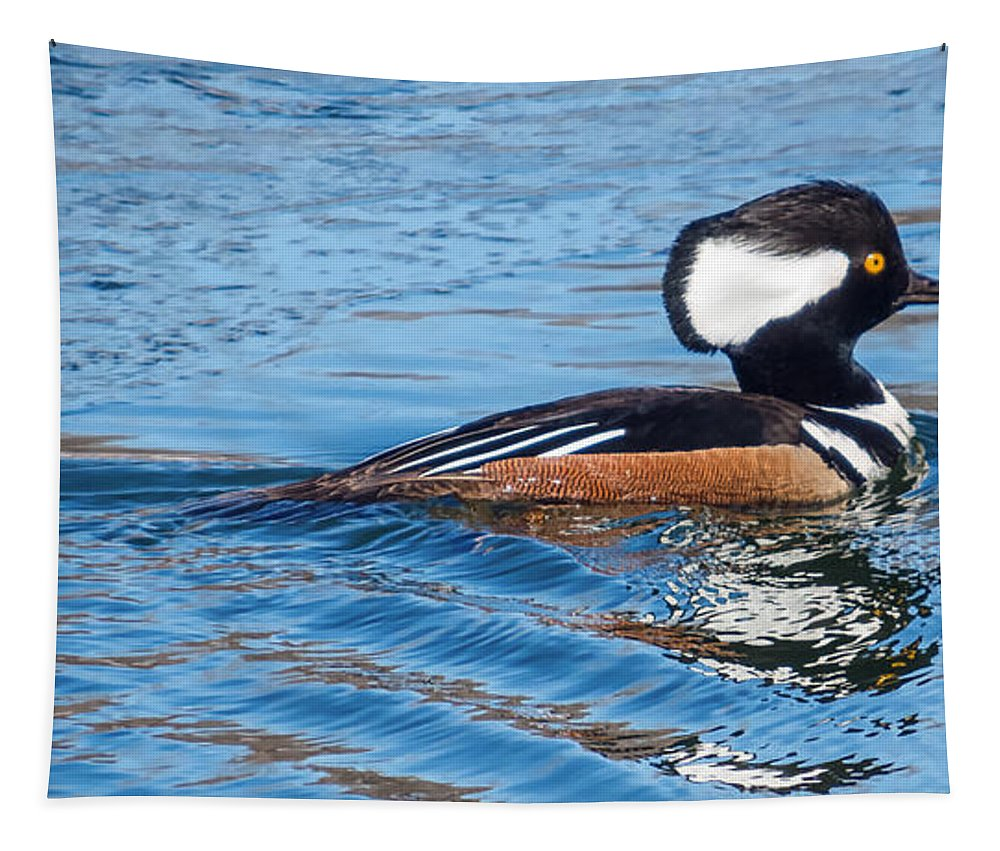 Male Hooded Merganser Tapestry featuring the photograph Male Hooded Merganser by Patti Deters