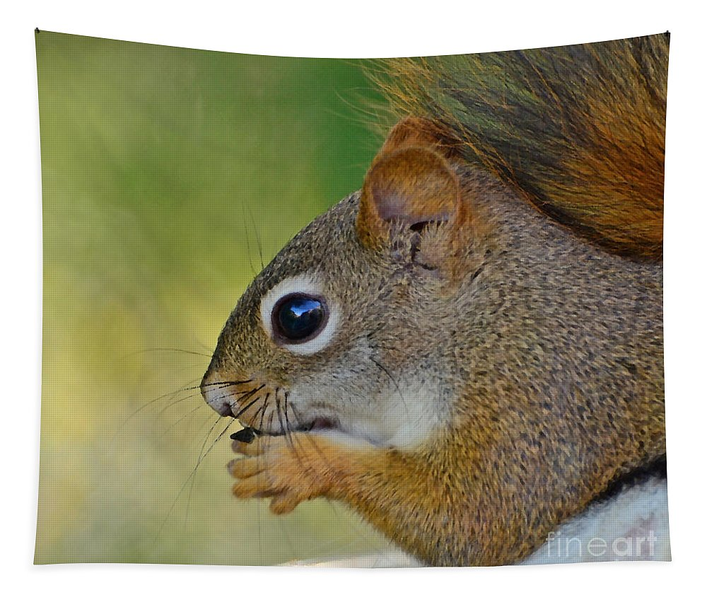 Squirrel Tapestry featuring the photograph Nom Nom Squirrel by Kerri Farley