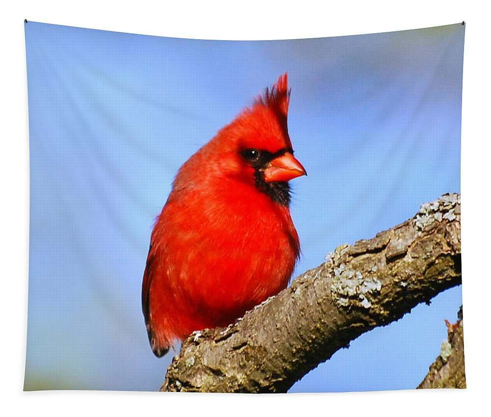 Cardinal Tapestry featuring the photograph Northern Cardinal by Christina Rollo