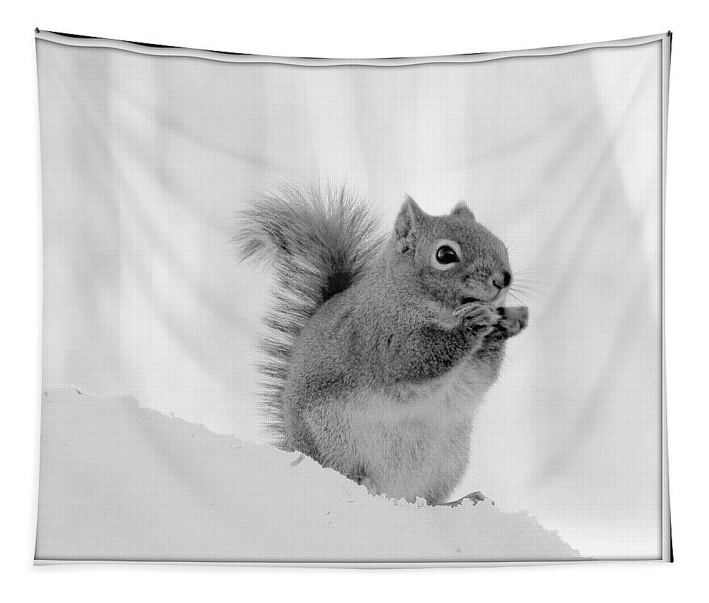 Nuts Over You Tapestry featuring the photograph Nuts Over You by Karen Cook