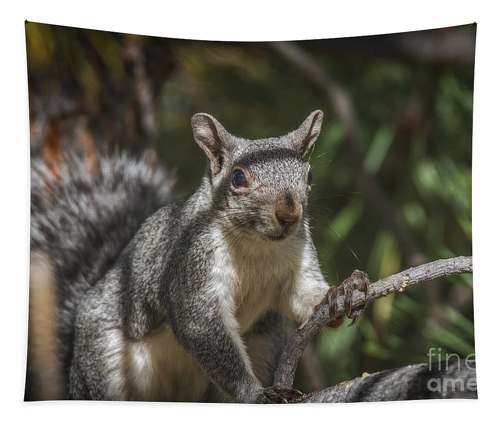 Nuts Please Tapestry featuring the photograph Nuts Please by Mitch Shindelbower