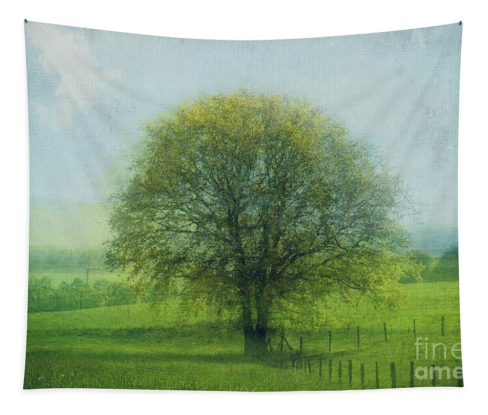 Atmosphere Tapestry featuring the photograph Oak Tree In Spring by Dirk Wuestenhagen