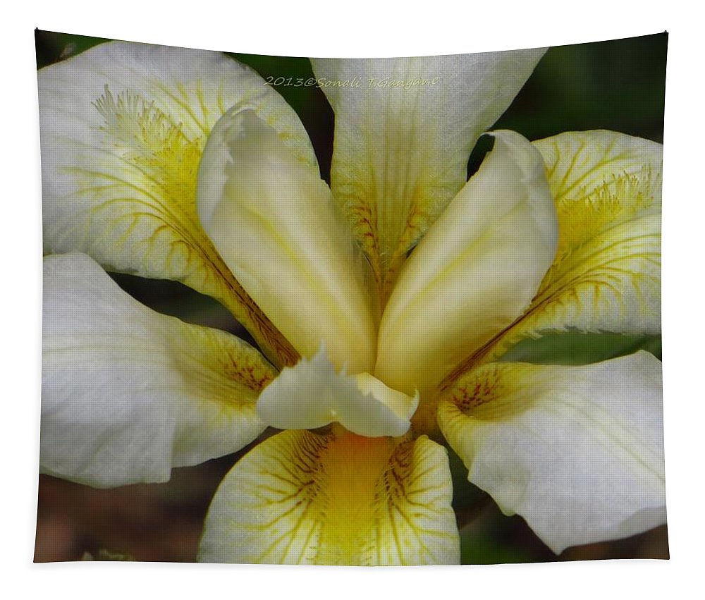 Iris Tapestry featuring the photograph Ochre Yellow Bearded Iris by Sonali Gangane
