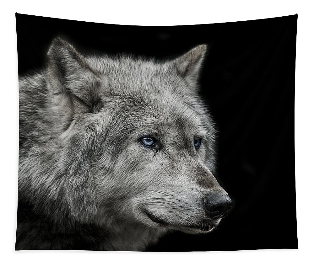 Wolf Tapestry featuring the photograph Old blue eyes by Paul Neville