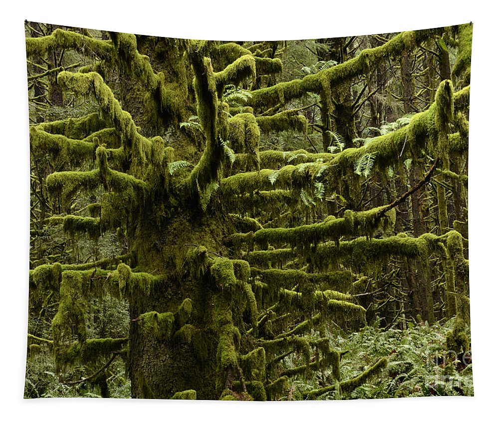 Oregon Tapestry featuring the photograph Old Timer by Bob Christopher