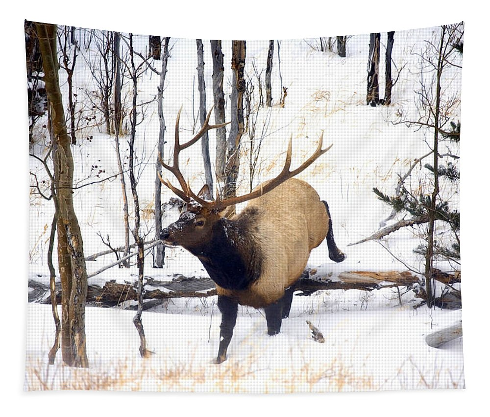 Elk Tapestry featuring the photograph On the Move by Mike Dawson