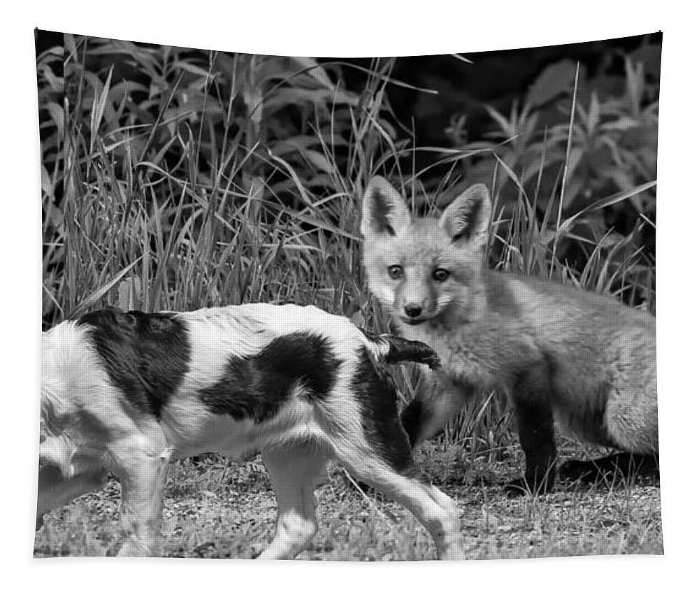 Fox Tapestry featuring the photograph On The Scent Monochrome by Steve Harrington
