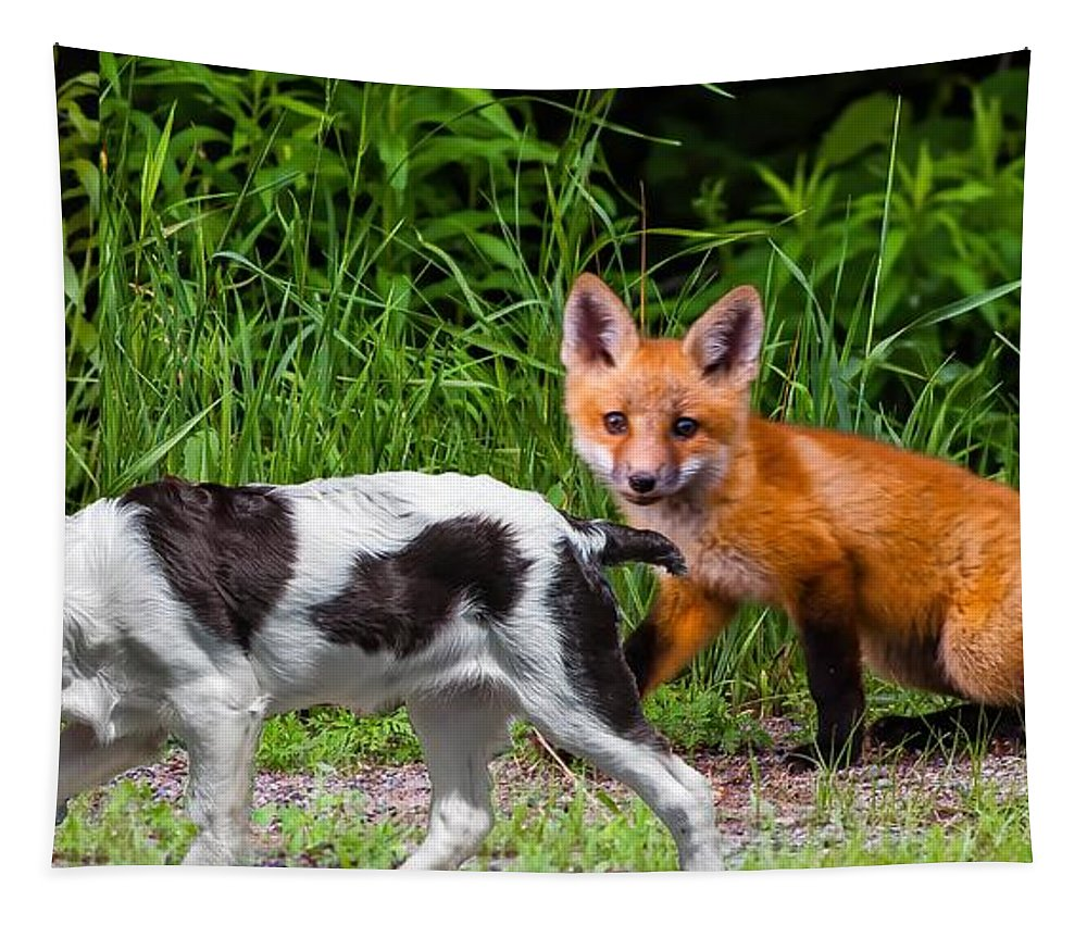 Fox Tapestry featuring the photograph On The Scent by Steve Harrington