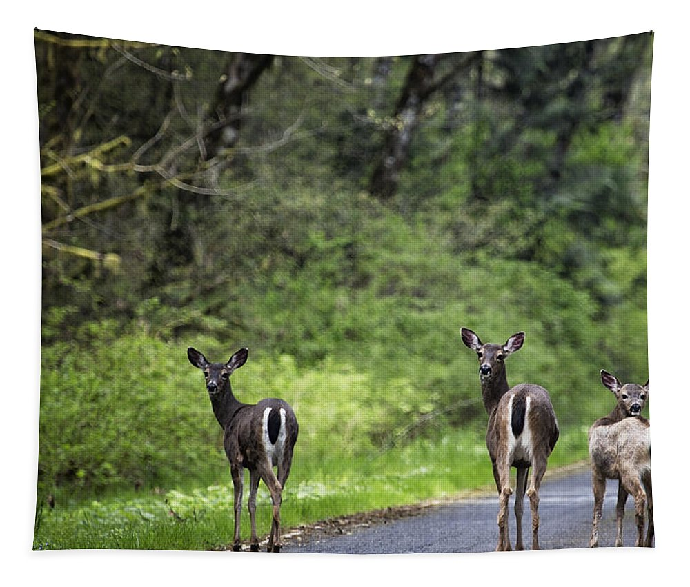Deer Tapestry featuring the photograph On The Way Home by Belinda Greb