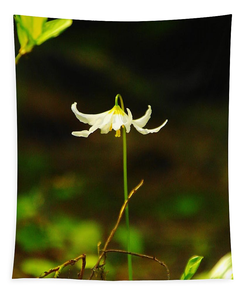 Wildflowers Tapestry featuring the photograph One Lily Almost Alone by Jeff Swan
