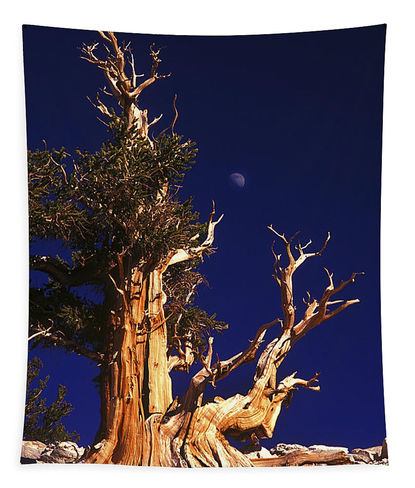 Bristlecone Tapestry featuring the photograph One Of The Ancient Ones by Paul W Faust - Impressions of Light