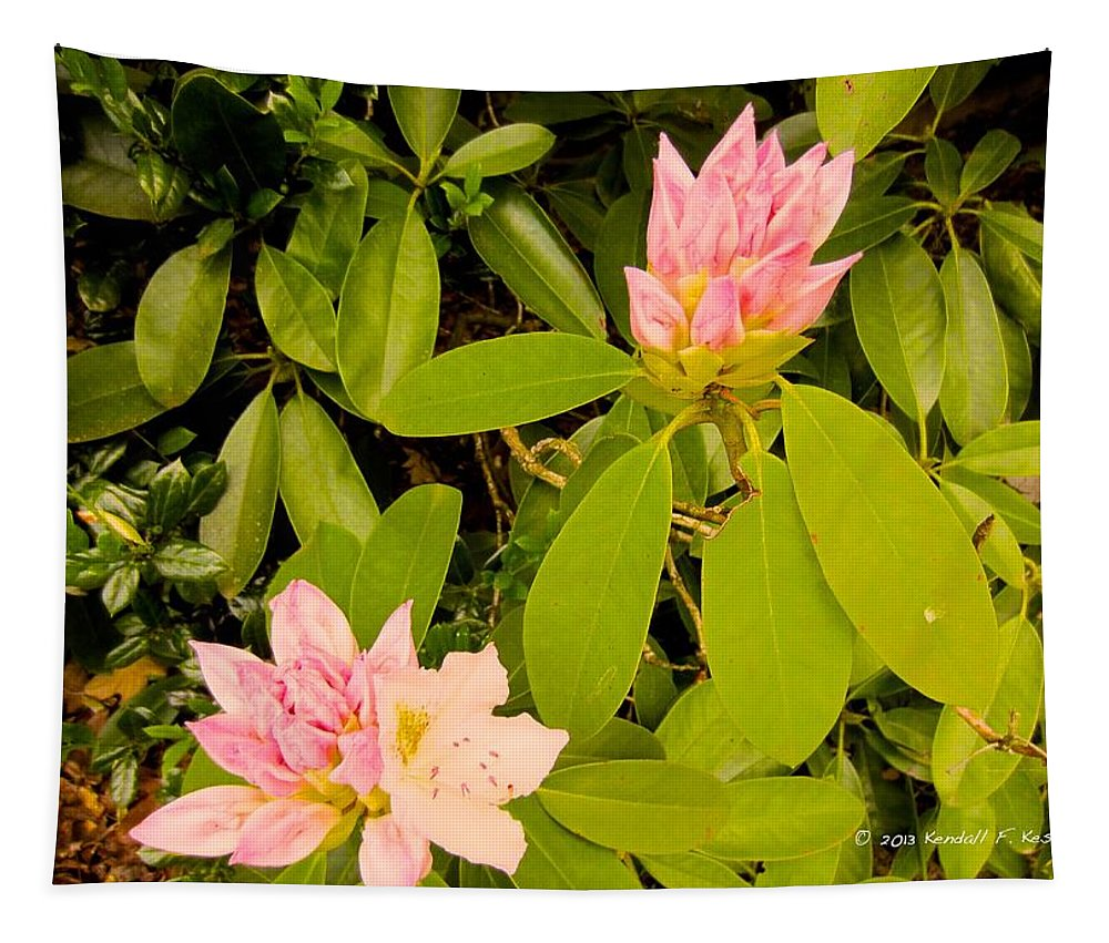 Rhododendron Tapestry featuring the photograph Opening Up by Kendall Kessler