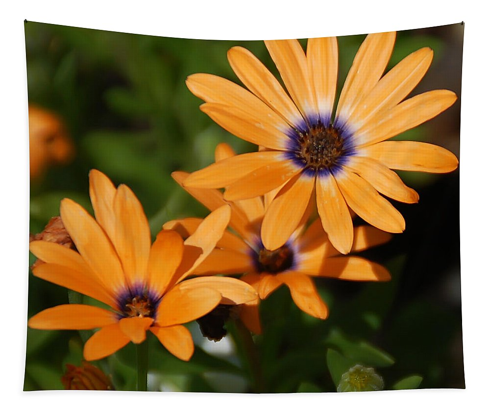 Daisy Tapestry featuring the photograph Orange Daisy by Aimee L Maher ALM GALLERY