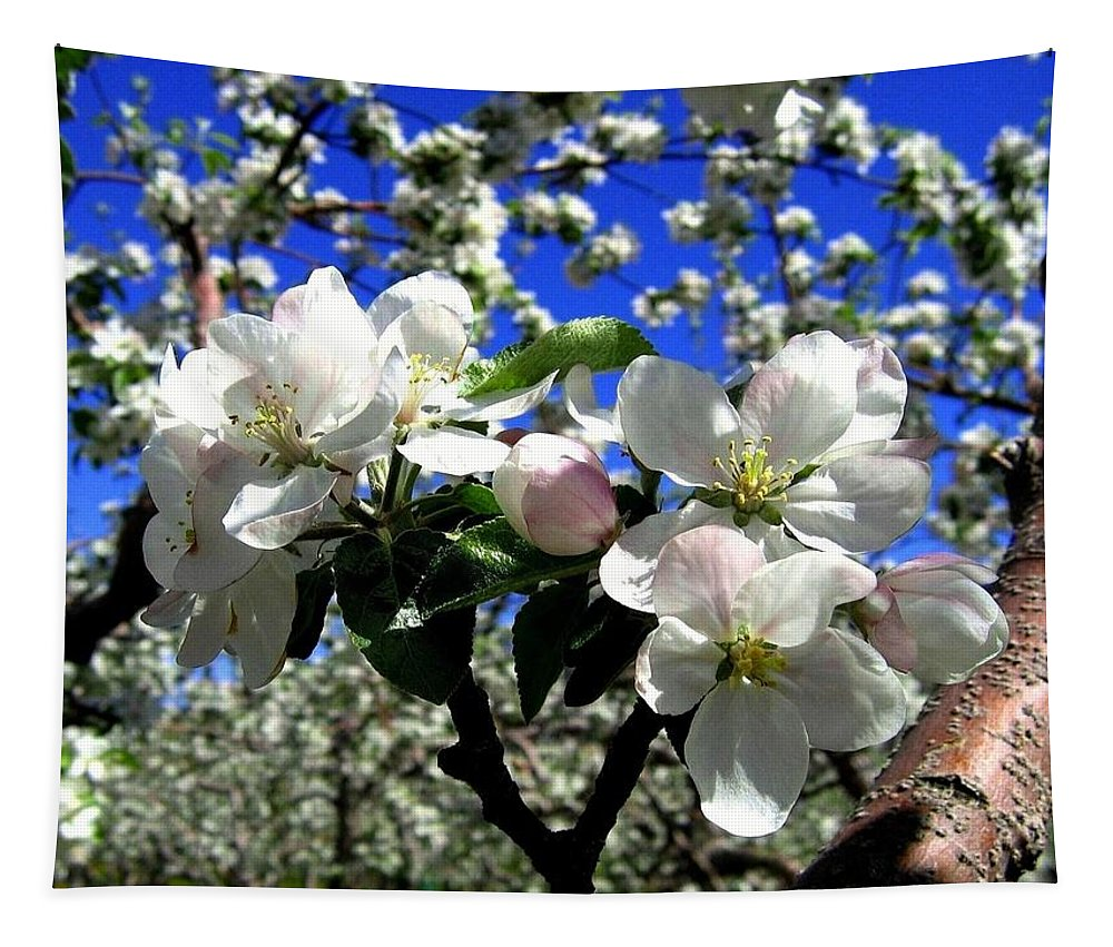 Apple Blossoms Tapestry featuring the photograph Orchard Ovation by Will Borden