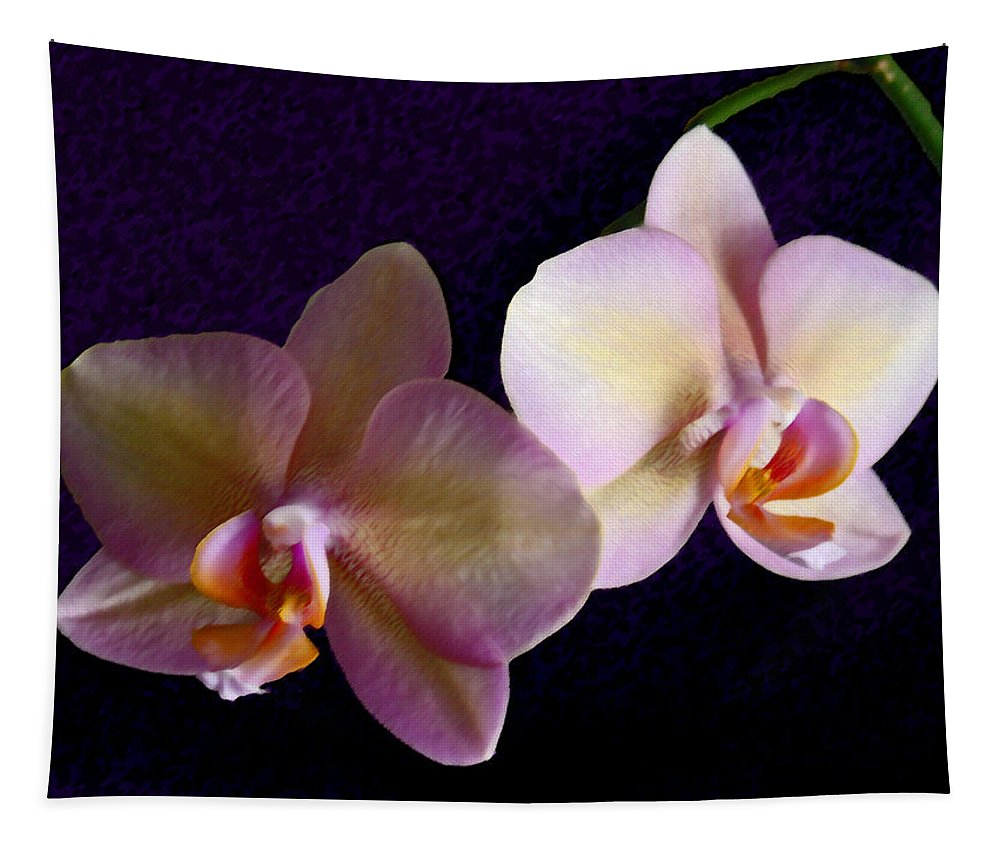 Orchid Tapestry featuring the photograph Orchid Light by Steve Karol