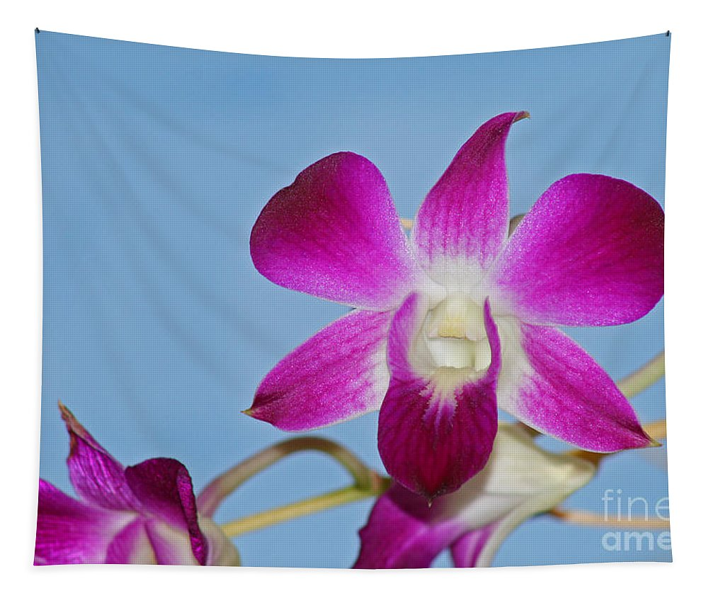 Orchid Tapestry featuring the photograph Orchids With Blue Sky by Karen Adams