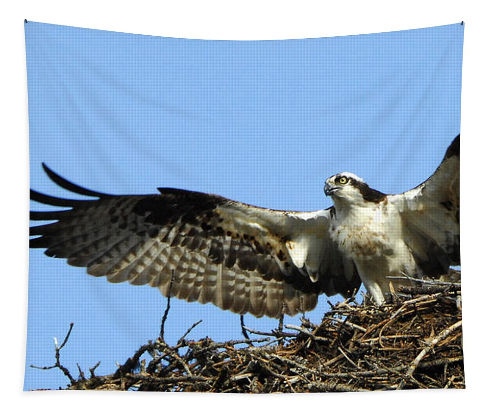 Osprey Tapestry featuring the photograph Osprey 10 by Bob Christopher