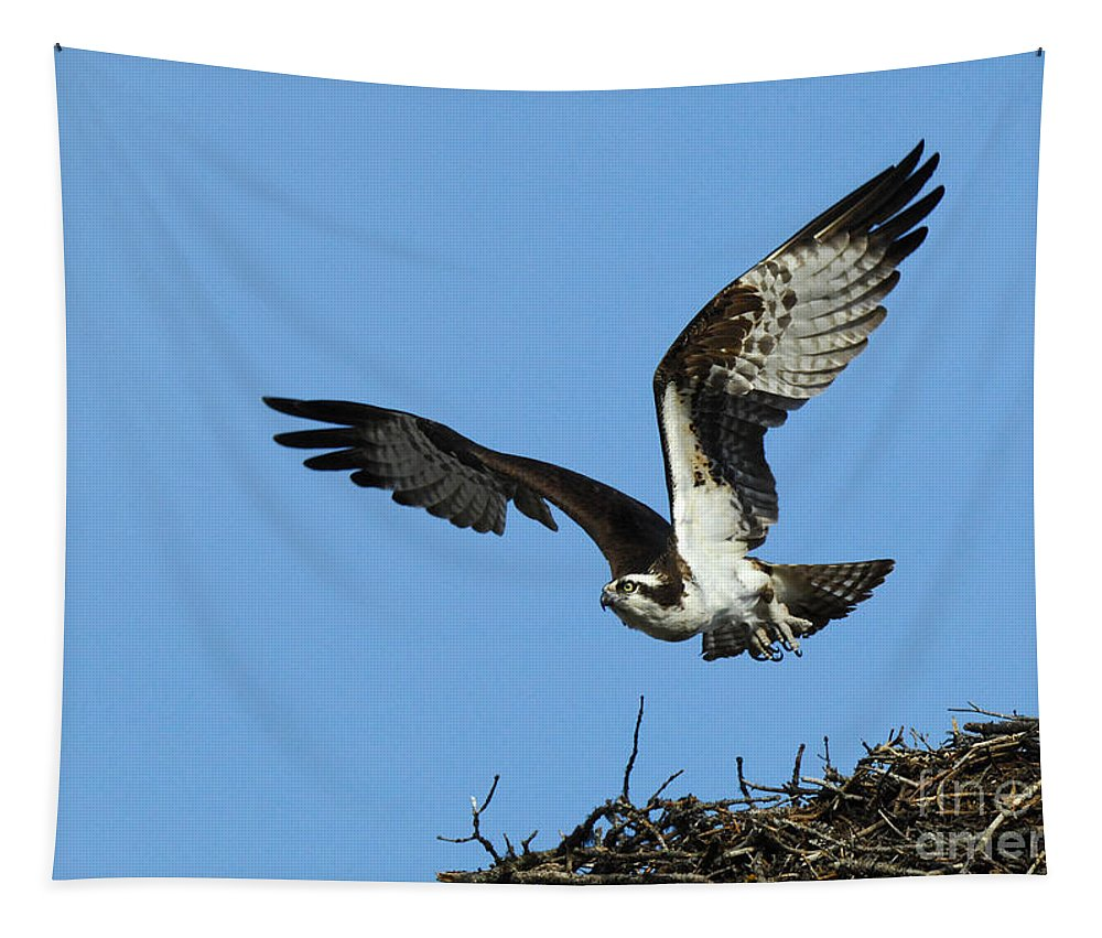 Osprey Tapestry featuring the photograph Osprey 9 by Bob Christopher
