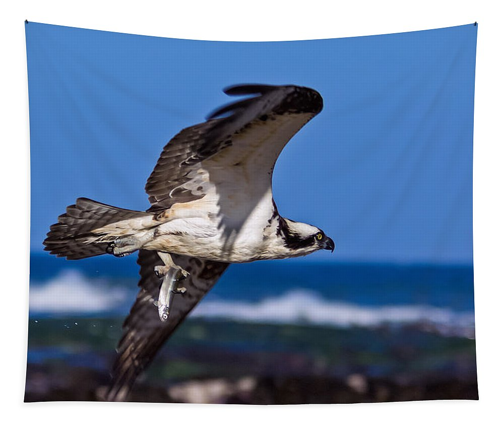 Osprey Tapestry featuring the photograph Osprey Bringing Home The Bacon by Kathleen Bishop