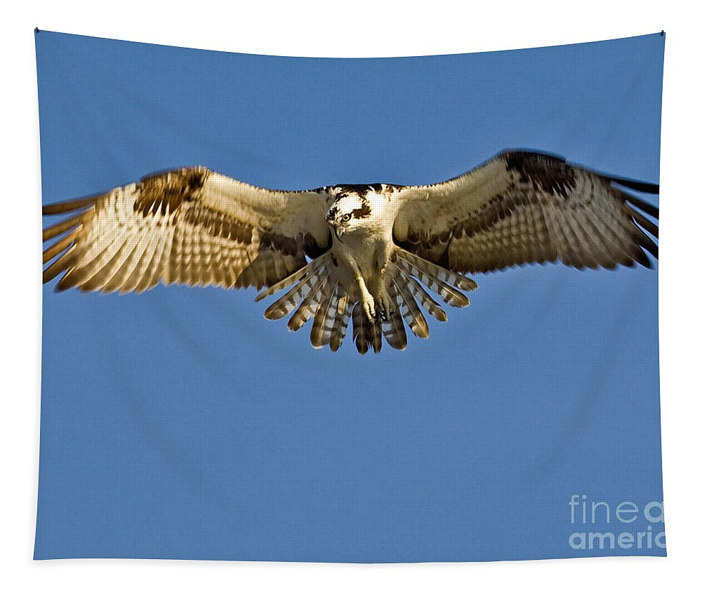 Osprey Tapestry featuring the photograph Osprey Hovering by Jerry Fornarotto