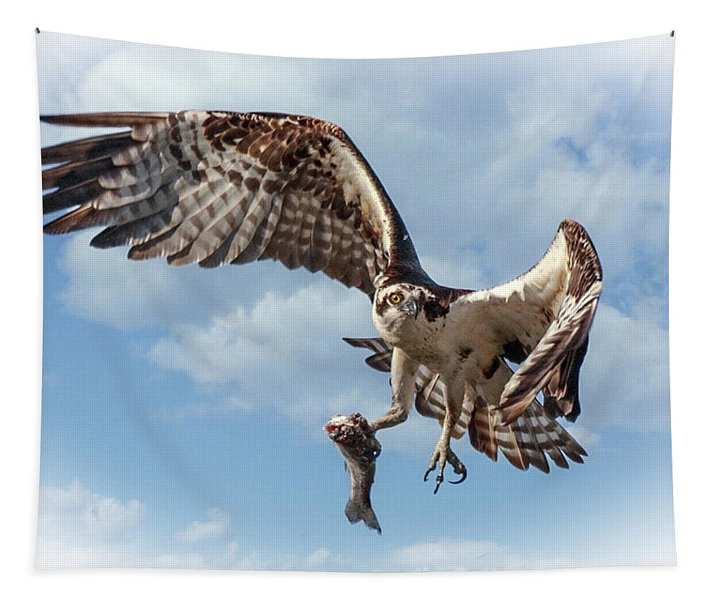 Osprey In The Clouds Tapestry featuring the photograph Osprey In The Clouds by Wes and Dotty Weber