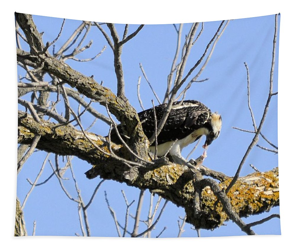 Osprey Tapestry featuring the photograph Osprey Meal Time by Bonfire Photography